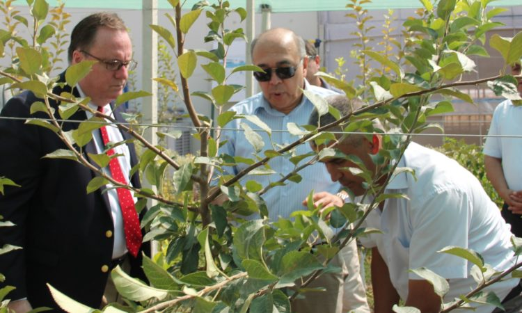 United States launches intensive orchard in Tashkent region